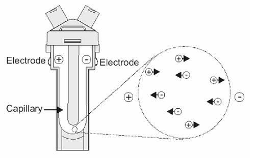 FAQ160705electrophoresis1